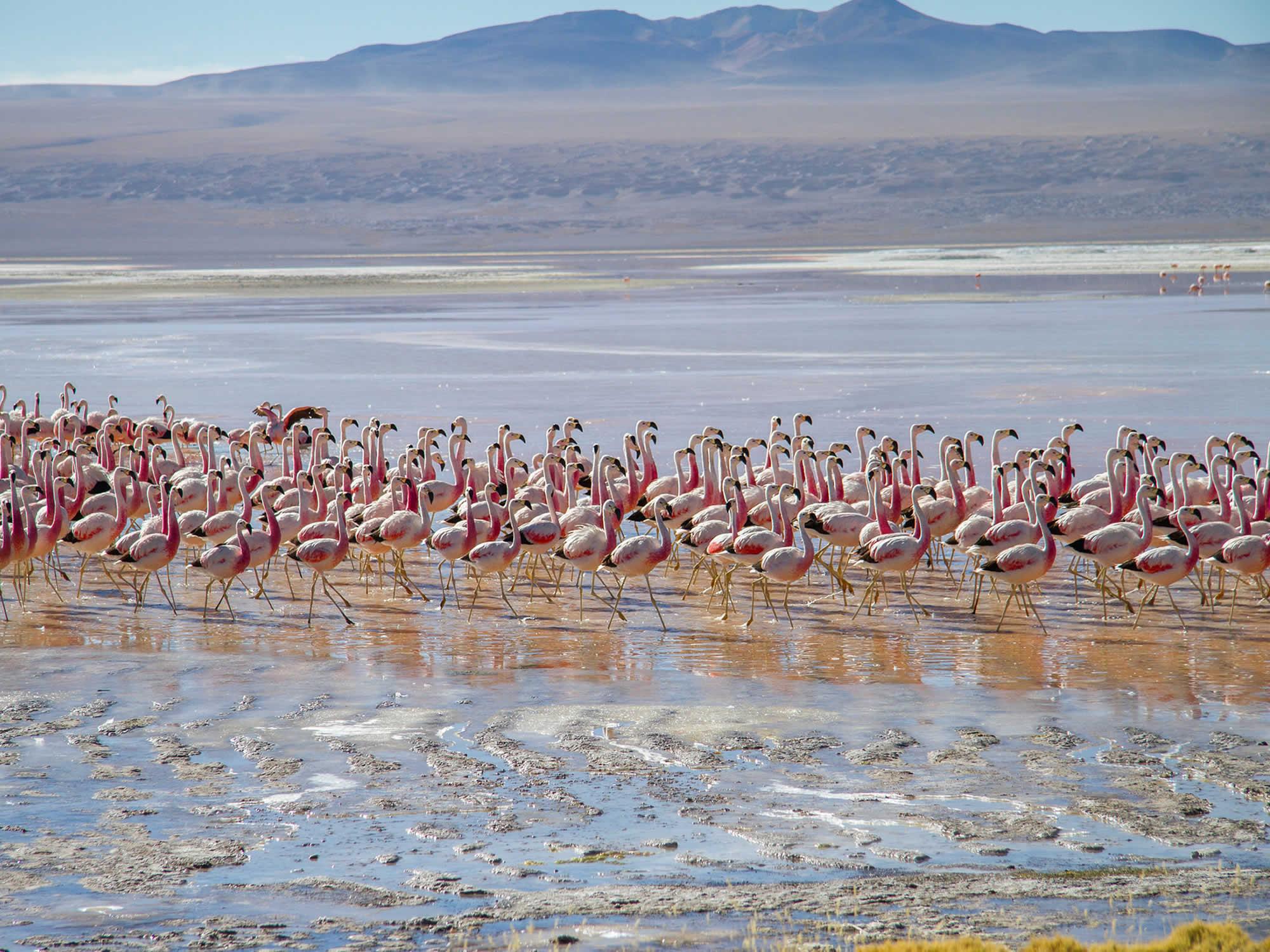 Reserva Nacional Eduardo Avaroa en Bolivia