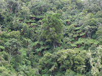National Park Amboro