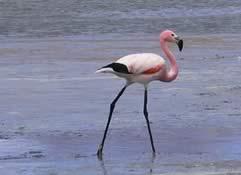 Fauna Andina