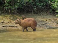 Boat trip in the Amazon region