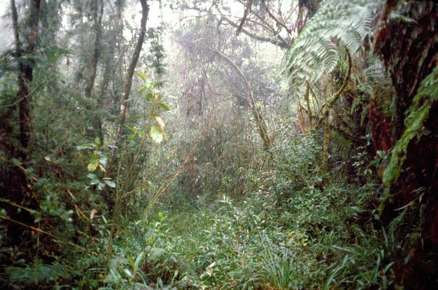 Parque Nacional Cotapata