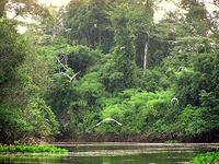 Lago Bay, Pando
