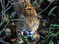 Manuripi Wildlife Reserve, Pando