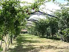 Hosteria Valle Divino, Valle Concepcion