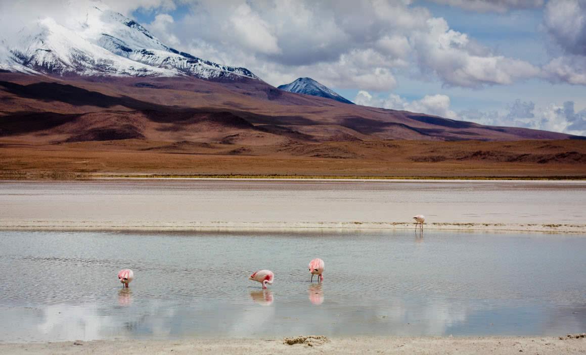 Salar de Uyuni y Lagunas de Colores - San Pedro de Atacama, Uyuni