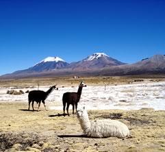 Sajama Park Tour, Oruro