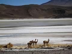 Private Tour Uyuni Salt Flat and Lagoons, Uyuni