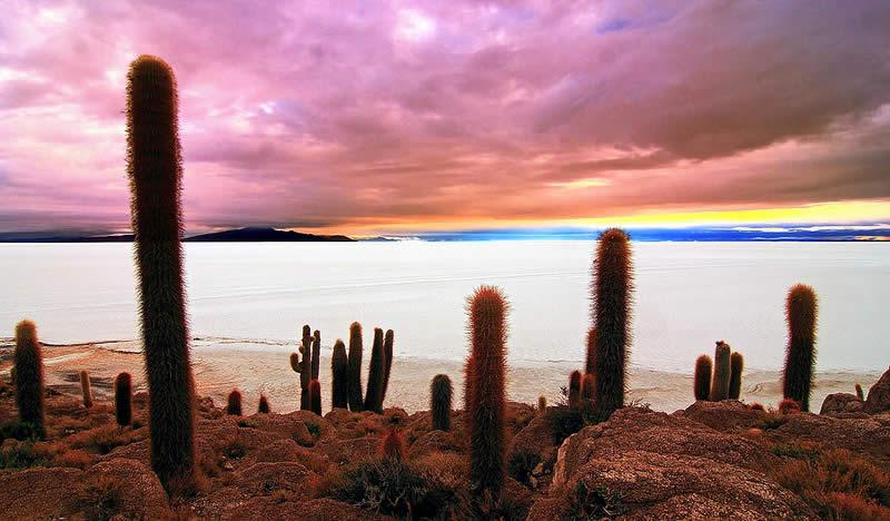 Uyuni Isla Incahuasi