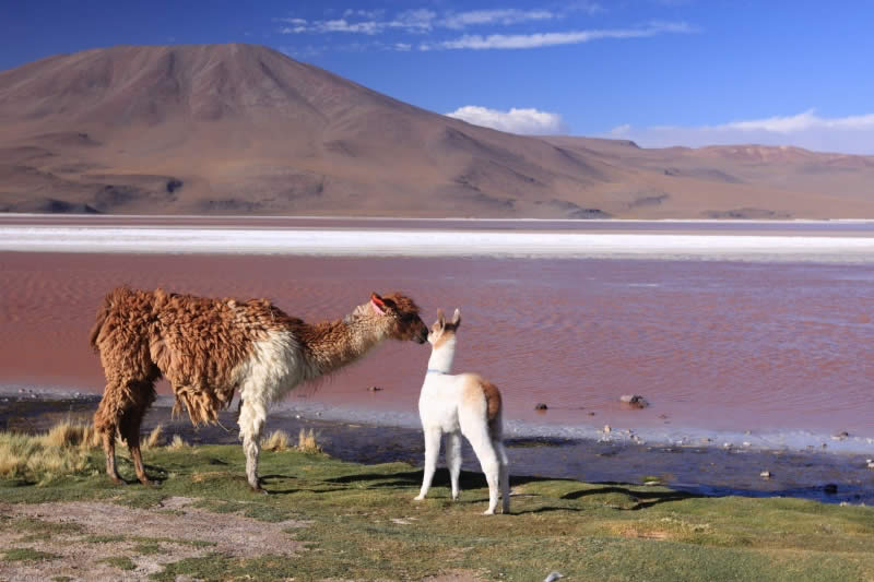 Reserva Nacional de Fauna Andina Uyuni Eduardo Avaroa