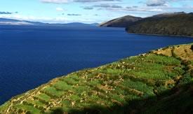 Titicaca Lake and Sun Island Tour, Isla del Sol